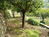 Villa immersa nel verde in vendita a Saponara in Vendita